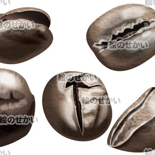 コーヒー豆のイラスト素材サンプル2